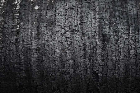 Burnt wood texture photo