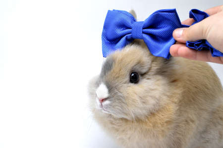 barrette: decoration, fun, mammal, white, tiny, sweet, bunny, creature, celebrate, clean, gift, traditional, fluffy, cute, small, fleecy, blue, merry, domestic, little, rabbit, giving, animal, beautiful, decoration, barrette, hand Stock Photo