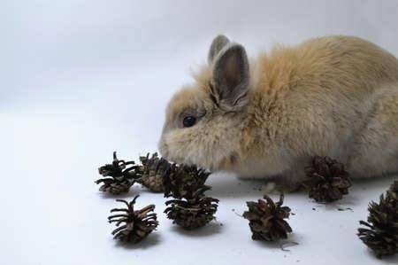 eats: Rabbit eats forest cones