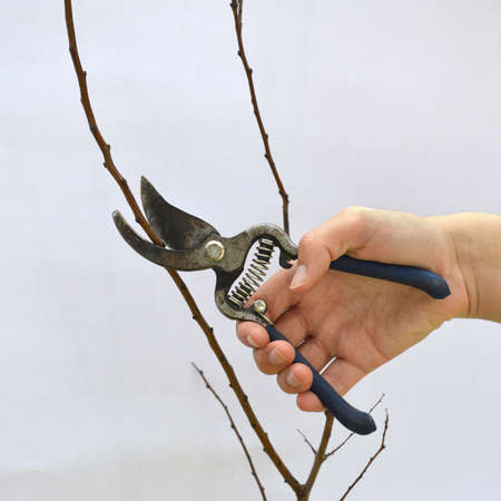 caring for: Caring for a tree Stock Photo