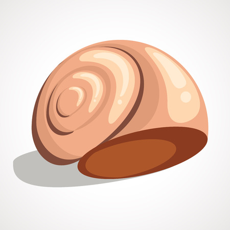 An image of a seashell drawing on a white background.
