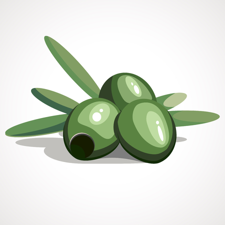 Vector Green Olives Branch with Leaves Isolated. Vector illustration
