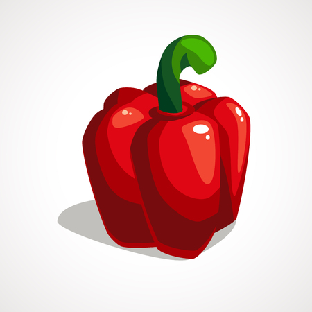 Red Bell pepper drawn illustration isolated on white background. Vector illustration