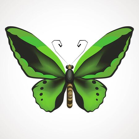 Green-black butterfly with outstretched wings. Vector illustration