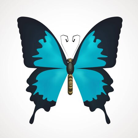 blue butterfly with open wings. Vector illustration Çizim