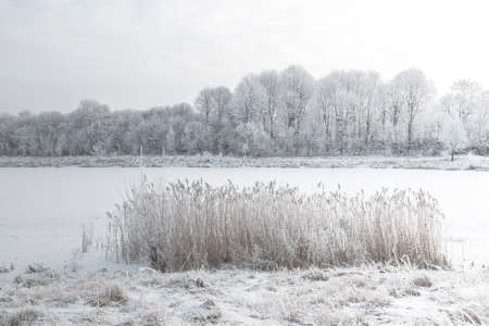White winter landscape - frosty trees and snowy river in cold morning. Tranquil winter nature.