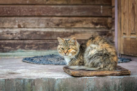 Ginger striped cat sitting on aged porch near door of old wooden house 写真素材