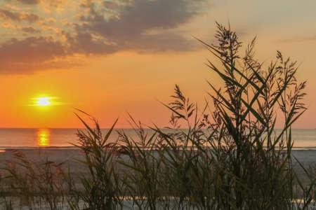 Schöner bunter Sonnenuntergang am Meer mit dramatischen Wolken, strahlender Sonne, Dämmerung und Meereskräutern an der Ostsee