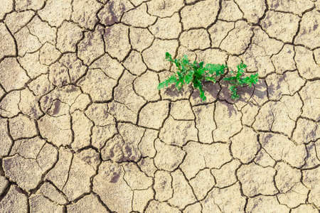 Green plants growing in dried desolate land. Plants grow up dry areas. Desolate earth with little grass from above. Plant on texture of dry cracked surface top view. Hopes and encouragement concept.