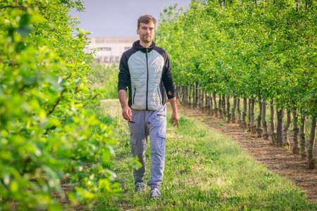Man walking alone on path in garden. Male on pathway between fruit trees. Single guy walking among trees in countryside park. Person in garden landscape. Foto de archivo