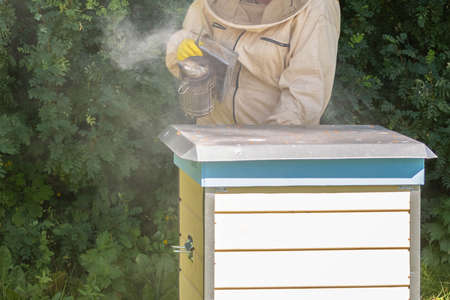 Beekeeper standing near hive and holding bee smoker. Person in beer suit blowing smoke to bees of beehive in apiary. Beekeeping in countryside. Organic farming concept.