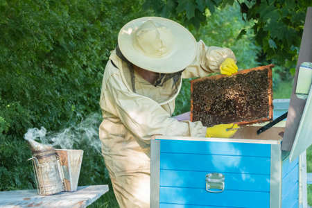 Beekeeper removing honeycomb from beehive. Person in beekeeper suit taking honey from hive. Farmer wearing bee suit working with honeycomb in apiary. Beekeeping in countryside. Organic farming