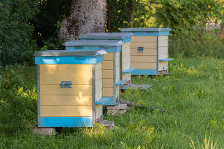 Row of yellow and blue beehives in green meadow. Hives standing in row on an apiary with bees in field. Many beehive on grass field. Beekeeping in countryside. Concept of organic farming. Copy space.