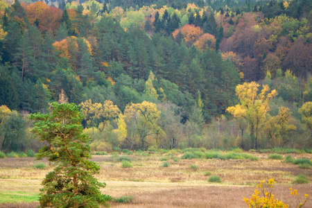 Gorgeous autumn forest panorama. Colorful fall scenery. Panoramic colorful autumn forest landscape. Panoramic view of multicolor fall forest. 免版税图像