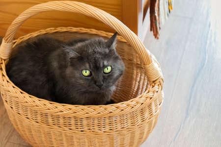 Cute cat sitting in wicker bag. Funny kitty hiding in basket. Dark gray cat close-up under wicker on floor 免版税图像
