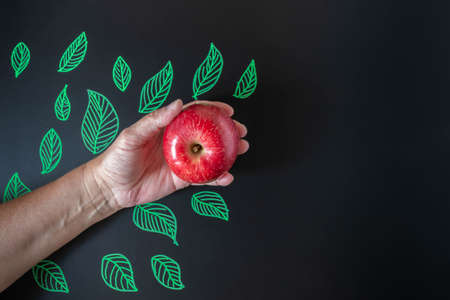 Hand holding red apple on blackboard with green drawn leaves. Apple in hand on black background with picture of leaves. Happy teacher's day. Health and school concept. Copy space