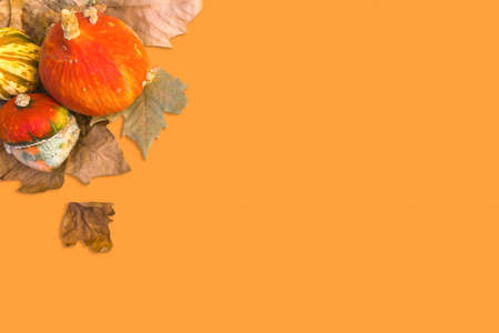 Orange raw pumpkins with dry autumn leaves in corner on orange background. Halloween vintage background. Mockup for Halloween. Flat lay. Top view. Selective focus 免版税图像