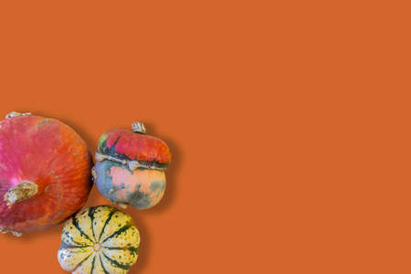 Colorful raw pumpkins in corner isolated on orange background with copy space for Halloween. Top view, flat lay