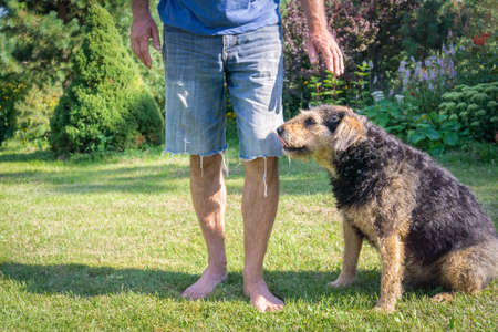 Man with his senior dog on grass. Adopted shaggy dog sitting next to owner man on green loan. Human legs in jeans shorts and old dog sitting in meadow