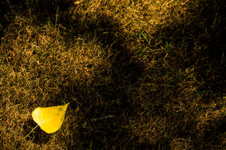 Blatt im Gras Standard-Bild - 82395223