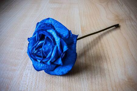 blue rose: Blue rose