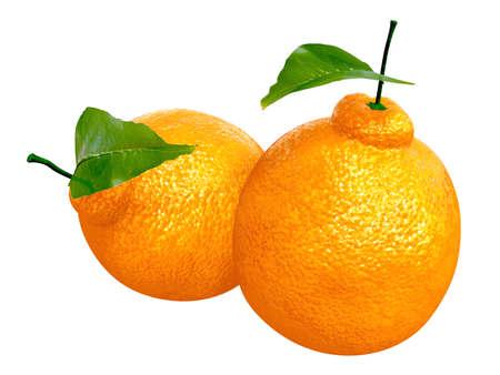 Two Fresh Dekopon orange. Foods and Dishes Series.