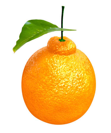 Fresh Dekopon orange. Foods and Dishes Series. Stock Photo