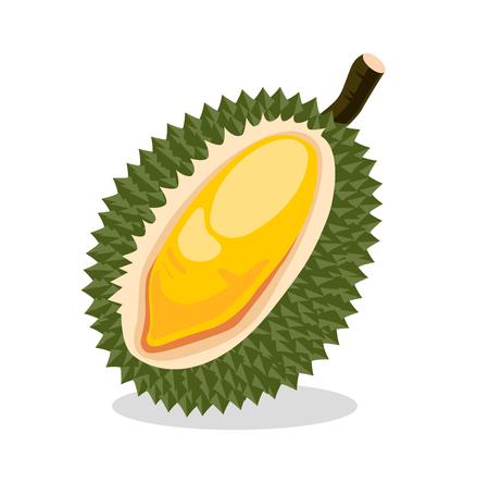 Durian. Exotic fruit. Vector illustration. Иллюстрация
