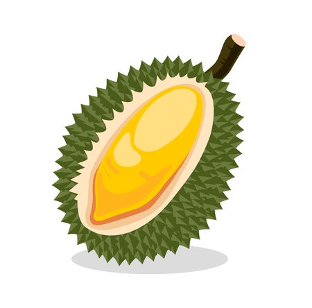 Durian. Exotic fruit. Vector illustration. Illustration