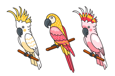 Yellow and pink cockatoos, macow. Cute tropical birds. Vector illustration