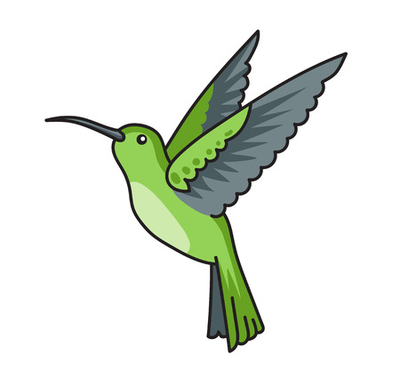 Little green colibri. Hummingbird, tropical little bird. Vector illustration