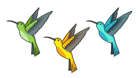 Hummingbird, colibri. Green, yellow, blue tropical birds. Colorful vector illustrations.