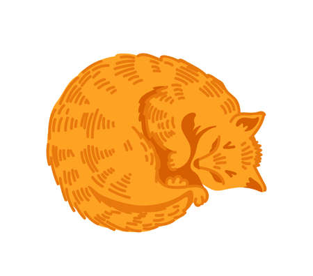 Red tabby cat sleeping curled up, rolled into ball. Soft ginger kitten. Kawaii cartoon character. Cozy home concept. Vector hand-drawn illustration.