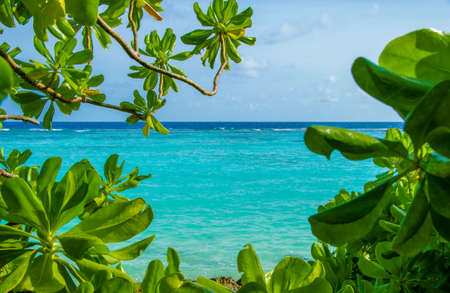 Beautiful view at turquoise sea lagoon with blue sky from tropical Maldives island. Nature holiday vacation background concept. Stunning green iron woods and blue waters.