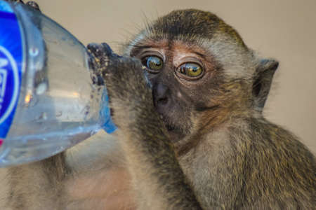 co operation: Macaques monkey seems very thirsty. A beautiful illustration of how a monkey is being provided with water from a human. We shall aim to leave peacefully and find a common language with all spices around us.