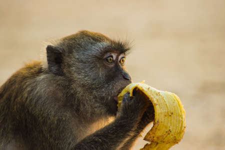appreciating: It is a clich that monkeys love bananas. But judging the picture it sure seems as this one is appreciating a banana, as it would be his last ever. Nonetheless, its a beautiful illustration of pure satisfaction.