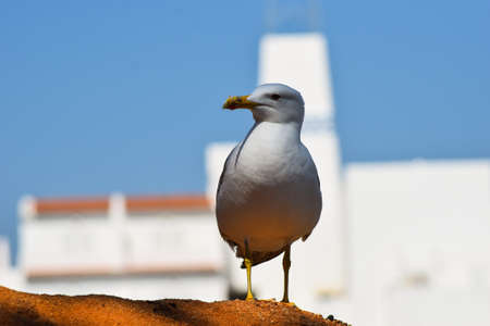 harassing: A close-up picture of a seagull.
