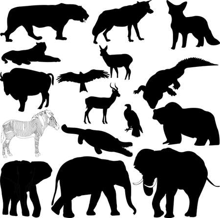 Vector illustration in silhouette of various wild animals Vector