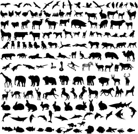 hundreds different animals  Vector