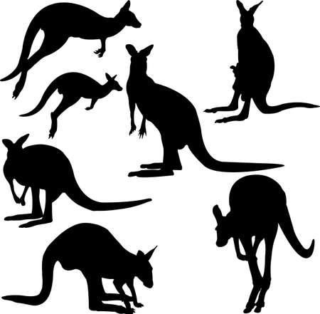 kangaroo silhouette collection - vector