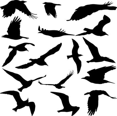 Birds Silhouettes collection on white background.