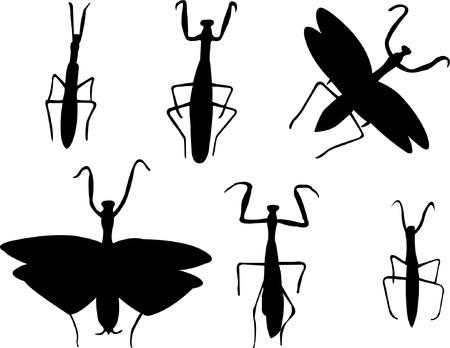 mantis: mantis collection - vector