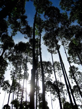 peaking: Sun peaking through trees against bright sky shadows
