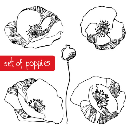 Set of hand-drawing poppies