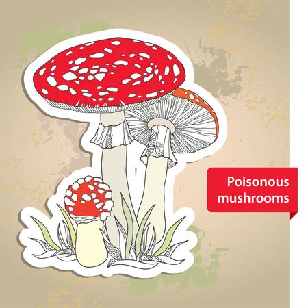 grebe: Amanita. Poisonous Mushroom on the textured beige background