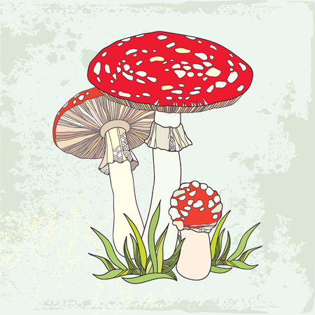 Amanita. Poisonous red-cup Mushroom in the grass