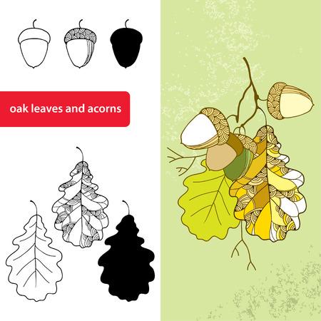 acorns: Set of the decorative oak leaves and acorns Illustration