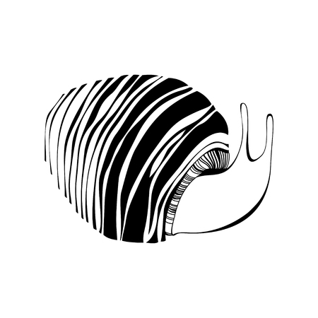 striated: Monochrome striped snail