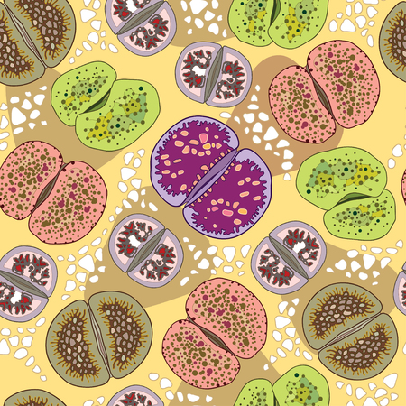 stria: Seamless pattern with variety Lithops. Series of different succulent plants
