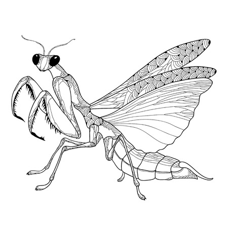 Mantis religiosa or Praying Mantis isolated on the white background. Mantis for your design.
